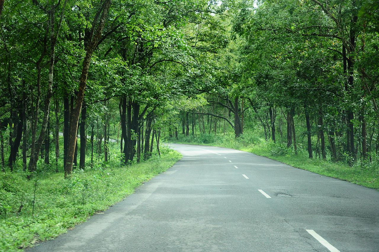 NH 212, now renumbered as National Highway 766 and NH 181, through Bandipur forest in Western Ghats, Kerala. Credits: Kamaljith KV/Wikimedia Commons